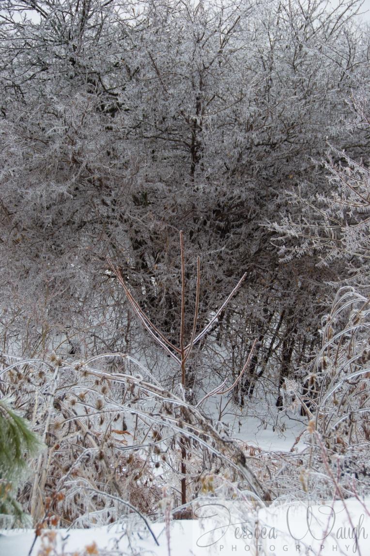 Ice storm  (11 of 17)