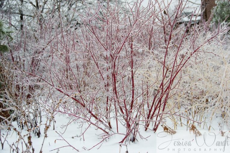Ice storm  (12 of 17)