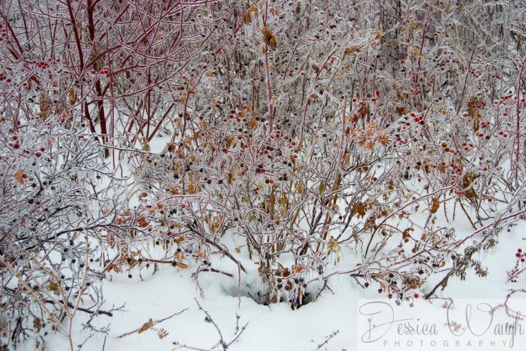 Ice storm  (14 of 17)