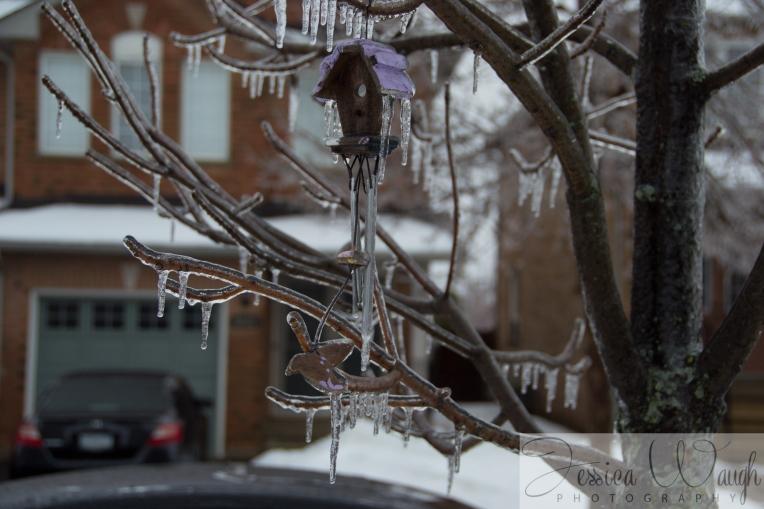 Ice storm  (4 of 17)