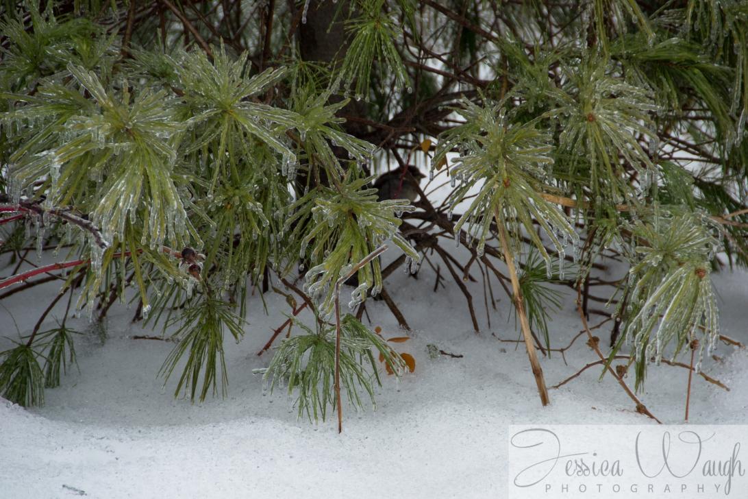 Ice storm  (5 of 17)