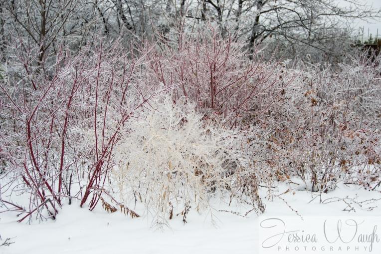Ice storm  (6 of 17)