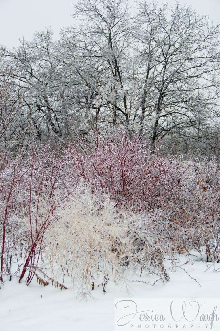 Ice storm  (7 of 17)