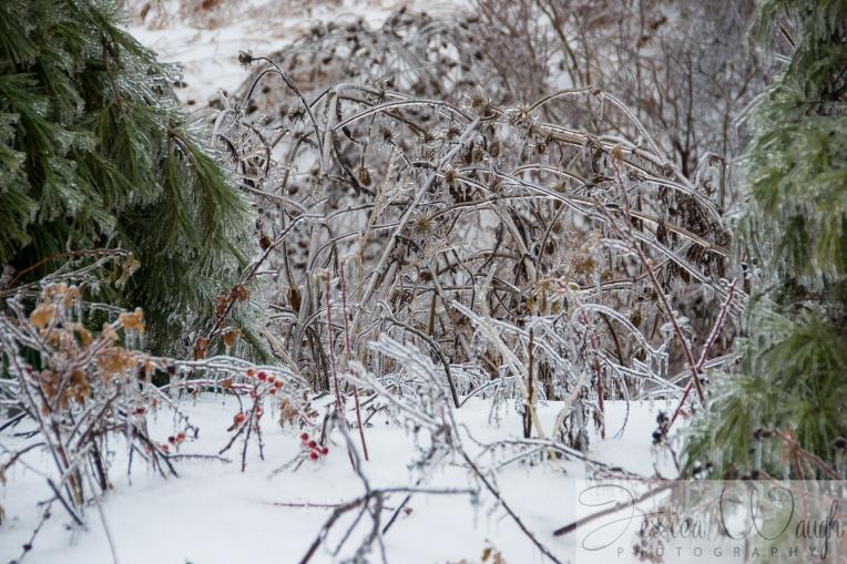 Ice storm  (8 of 17)